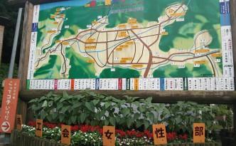 map&flower